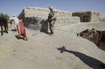 afgan 7