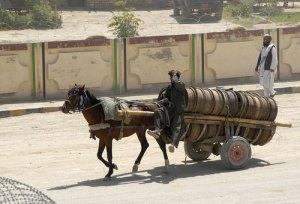 horse-afghanistan-5
