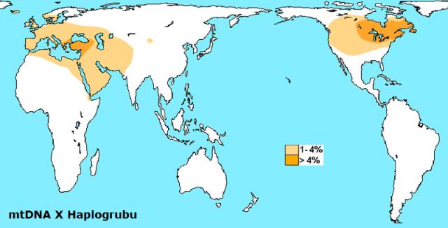 mtDNA X haplogrup haritası